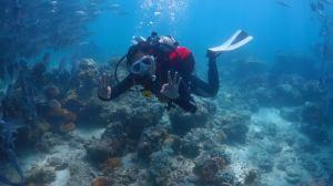 Diving at Sipadan