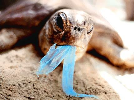 Turtle Mistaking Plastic for Food